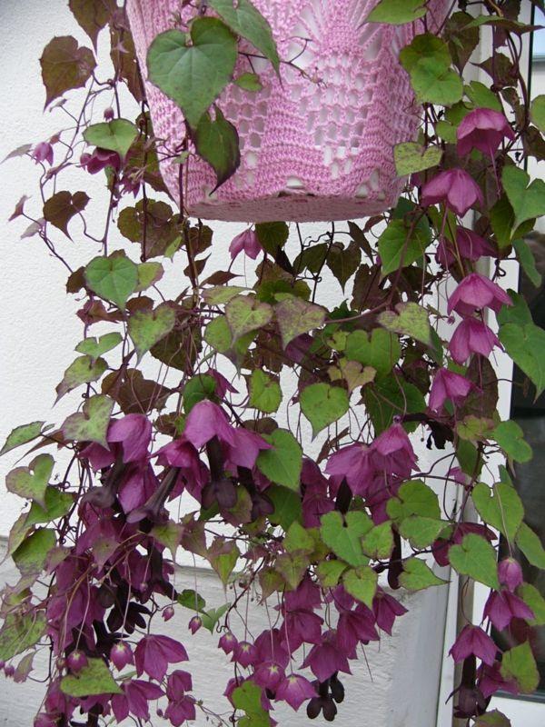Die 25+ Besten Ideen Zu Exotische Pflanzen Auf Pinterest ... Balkonblumen Pflanzen Kalten Jahreszeit