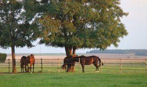 Chambre Tourisme Equestre
