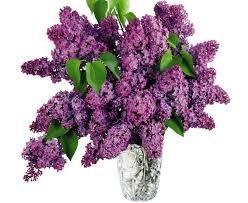 Best flowers images beautiful flowers flowers