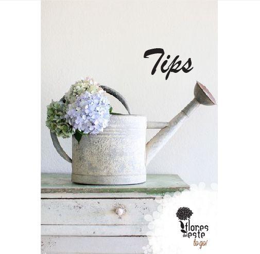 Tip nùmero 2: En 1 litro de agua disuelve 2 sobres de comida.#hortensias #flores #decoración #diseño #elegancia #floresdelestetogo #floresdeleste