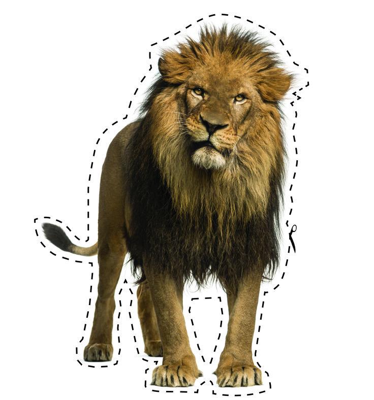 Contactez-nous pour des designs bestialement convaincants!  #lion #designgraphique #design #sauterelledesign #melanietruchon  Contact us for some bestially convincing designs!  #lion #graphicdesign #design #sauterelledesign #melanietruchon