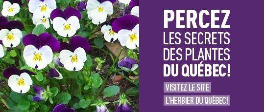 Percez les secrets des plantes du Québec - Visitez le site l'Herbier du Québec