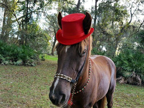 Red Fedora Hat For Horses Equine Coachman Costume Top Hat Etsy Red Fedora Hat Red Fedora Top Hat Costume