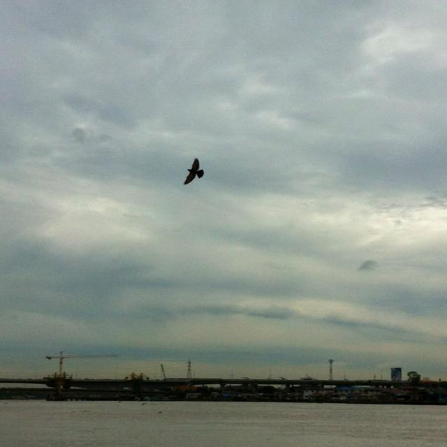 Fly! ... @ สะพานพระนั่งเกล้า
