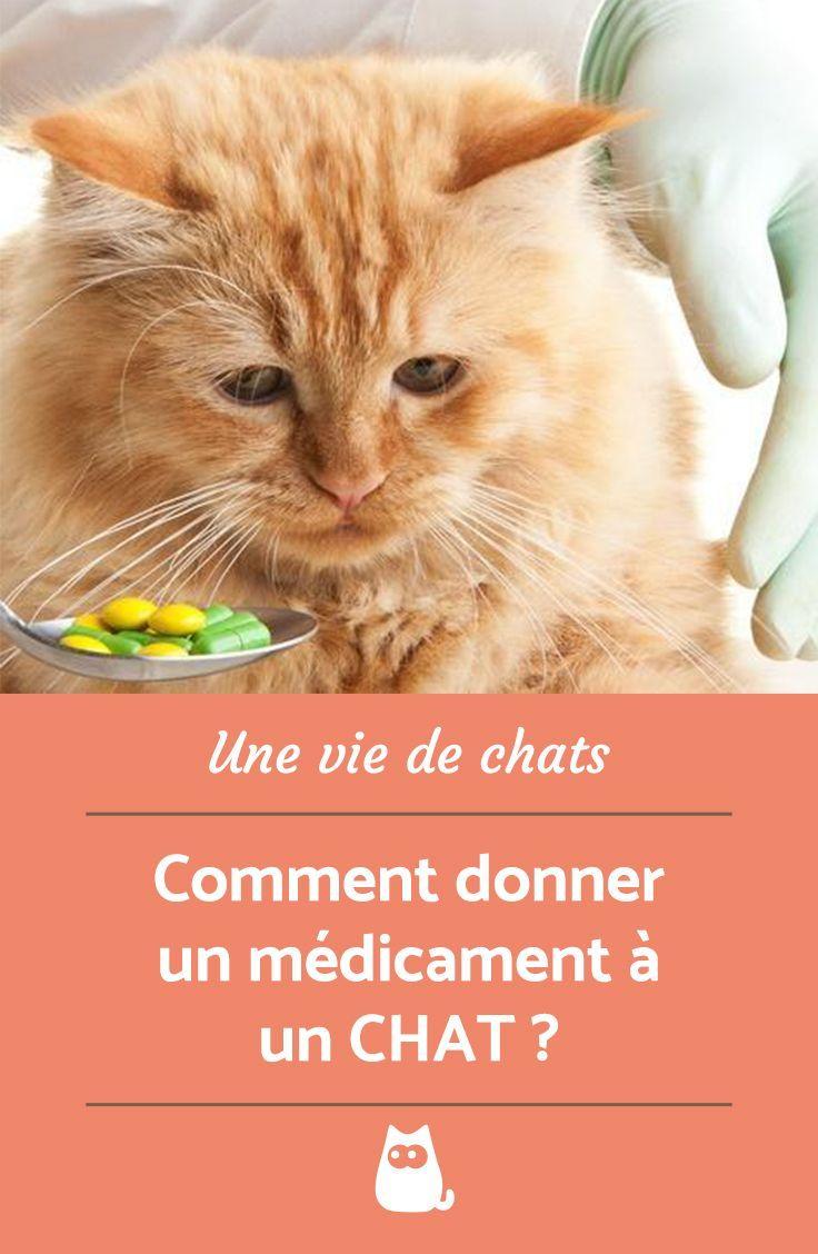 Tout Savoir Sur Les Chats : savoir, chats, Épinglé, Savoir, Chats