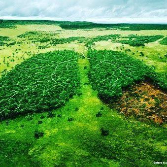 Reto 10. Retórica visual en la que vemos como los pulmones del planeta son los árboles, y como su tala está acabando con el oxígeno de la Tierra. #RetoVisual0911 #CA0911