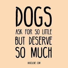 #DogQuote #Dog #Quote ~ Dogs ask for so little but deserve so much