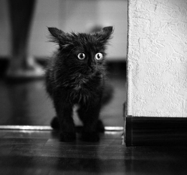 Блестяшки, картинки про черных кошек смешные
