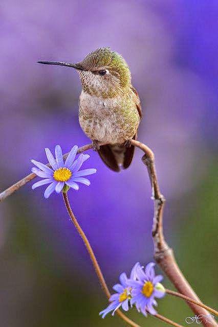 Google birds pinterest vogel einzigartige tiere for Kleine fliegen an blumen