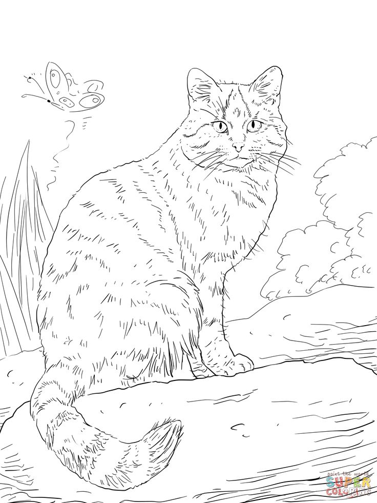 european wild cat coloring page wild cats coloring pages