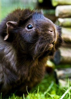 Handsome piggie !