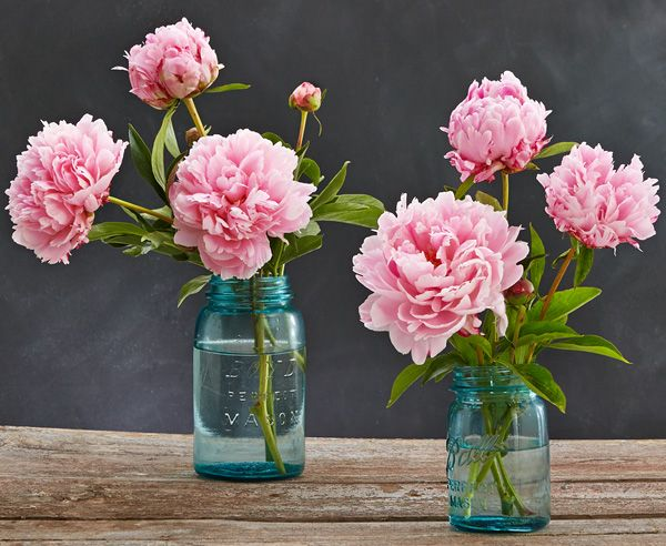 Peonies Season 56 best peony perfection images on pinterest | pink peonies