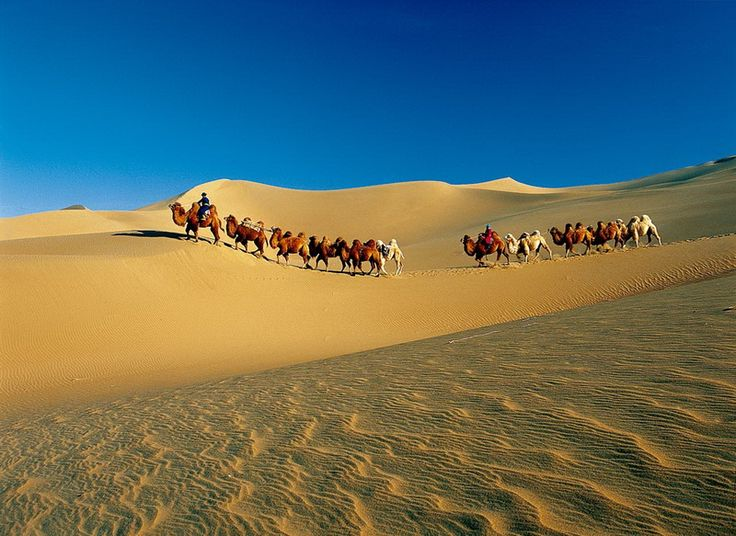 Badain Jaran camel trekking