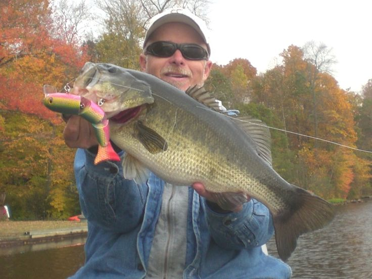 218 best images about fishing on pinterest fly shop for Bass pro shops monster fish