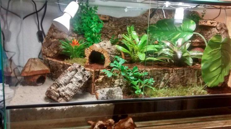 terrarium landeinsiedlerkrebs hermit crab tank terrarium pet cage