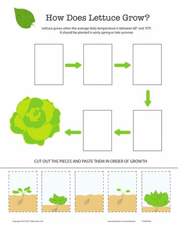Worksheets: How Does It Grow? Lettuce  http://www.vegetable-garden-guide.com/how-to-grow-lettuce.html
