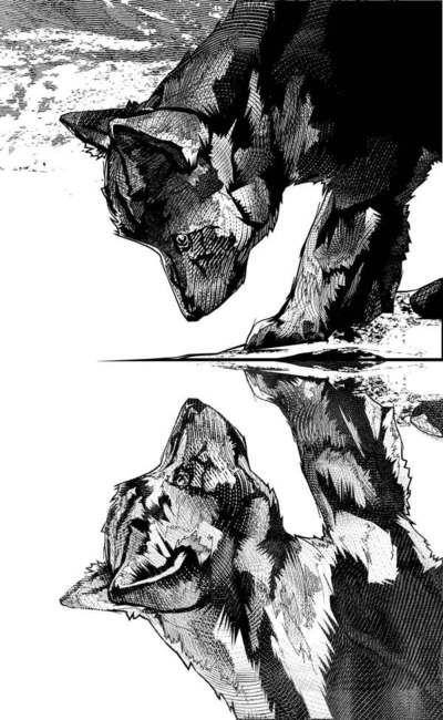 Kako . White Fang, 2008.        Client: Editora Scipione - Brazil Fazer em 2 folhas nanquim.. Carvão.. Não sei que material ainda.. fechar fazendo a copia na outra folha, retocar o segundo lobo depois