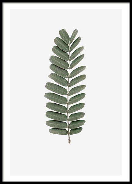 Tamaring leaf, poster i gruppen Posters och prints hos Desenio AB (8362)