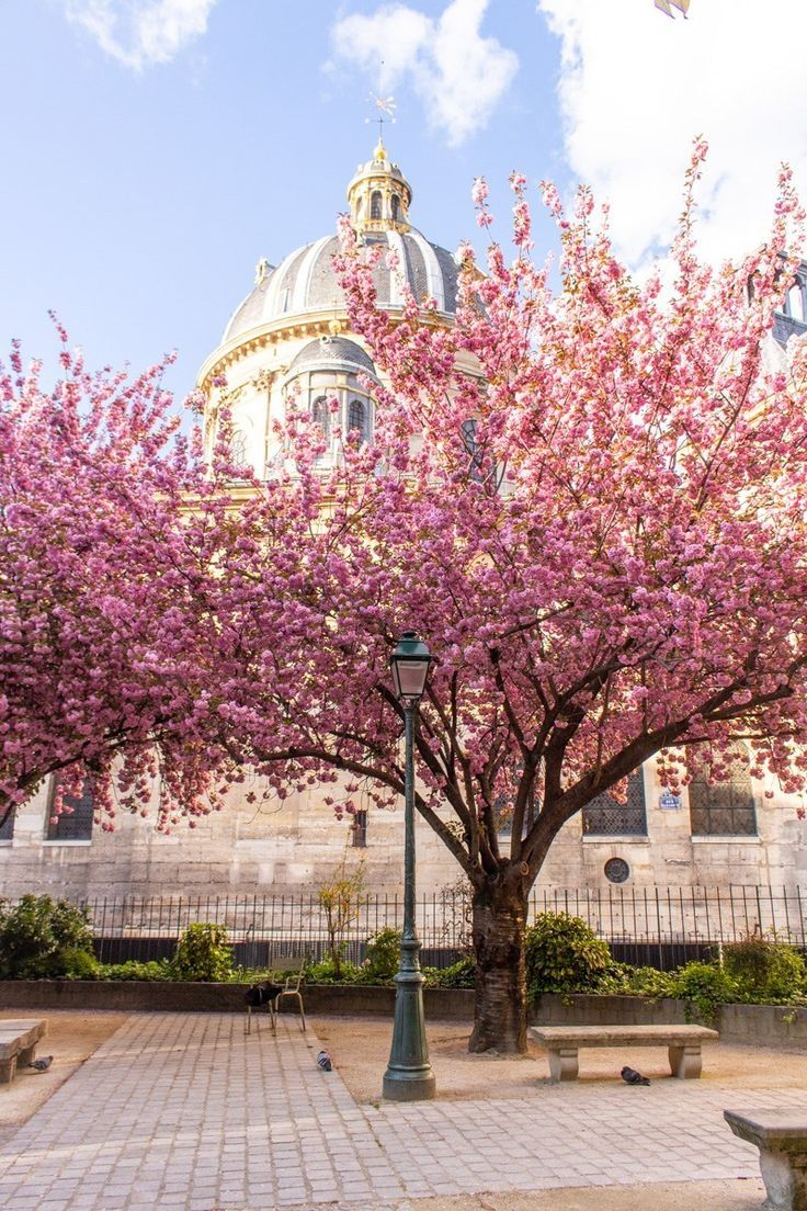 Cherry Blossoms In Paris My French Country Home My French Country Home French Country House French Country