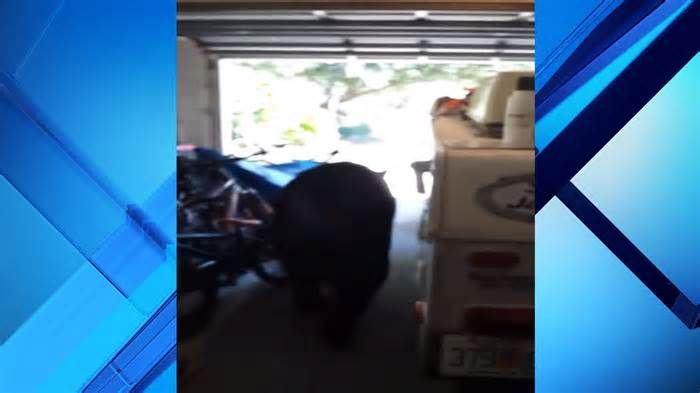 Man captures video of bear in garage of Seminole County home I don't know why, but we should be scared of such an animal,