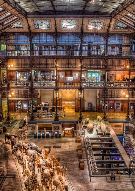 The Natural History Museum, Paris