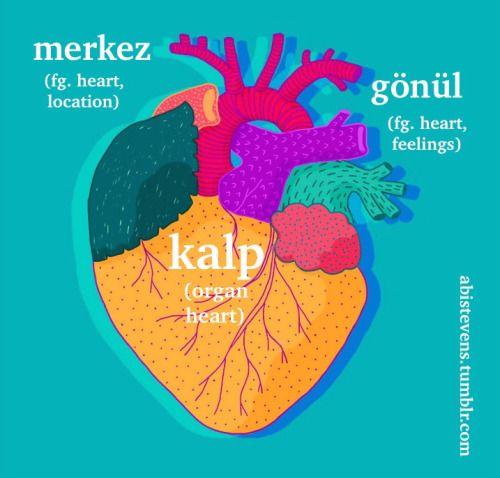 Turkish words:  kalp - heart, as in the organ gönül - heart as in the location of feelings merkez - heart as in the center of a location