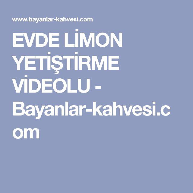 EVDE LİMON YETİŞTİRME VİDEOLU - Bayanlar-kahvesi.com