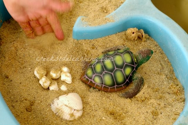 sea turtle facts for kids {Creekside Learning}