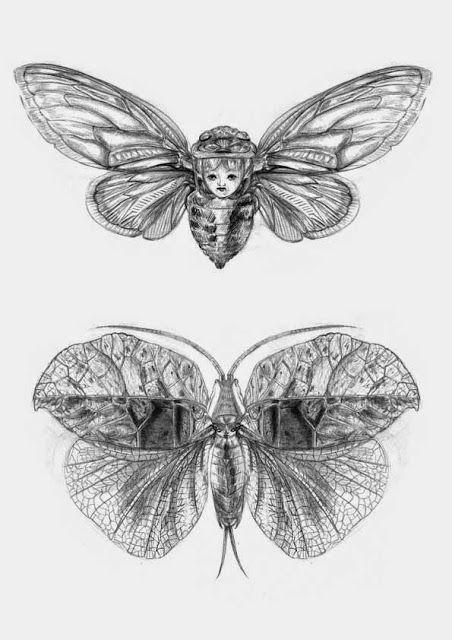 Pauline Amélie Pops : Cicada