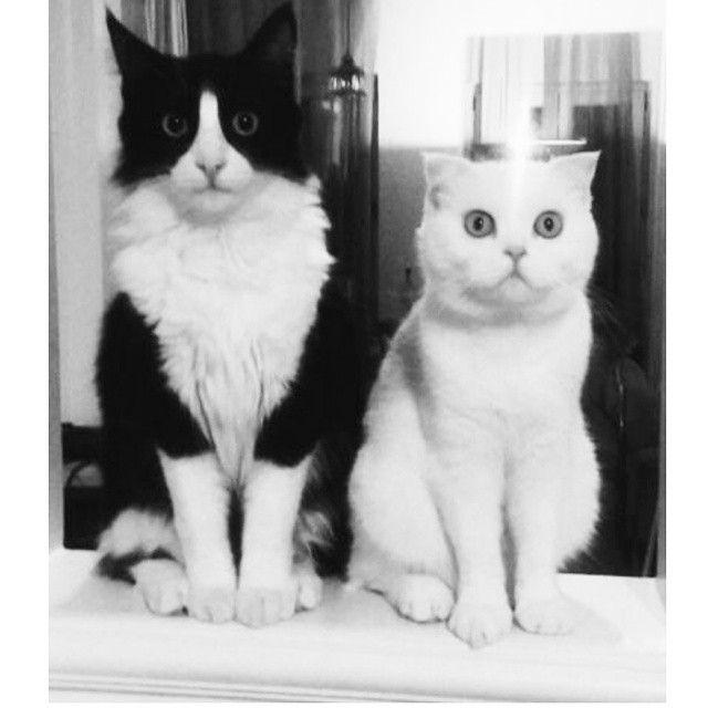 #acoupleofcats #batman&rahsan #catstagram #cats #instacat #instakedi #instagood #instadaily #instalike #tuxedo #symmetry #lovers #kedi #instapet #catsofinstagram #catlover #crazycatlady #family #couple