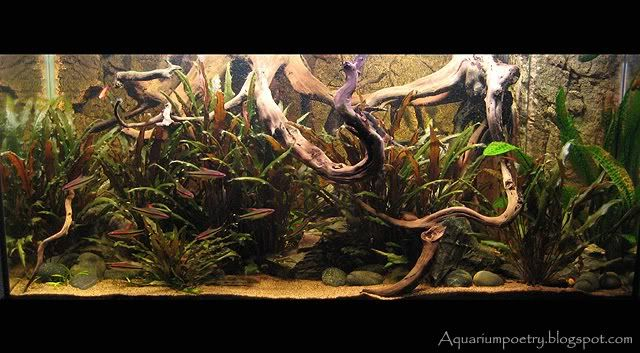 Riverbank Project (grow out tank) - Tropical Fish Forums ...