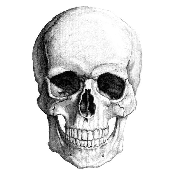 skull drawing - Google Search