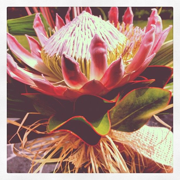 King Protea Bouquet for High Fashion Mag - Flowers by Heidi