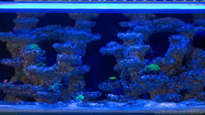 Aquarium Fluval M90 - nur mit Riffkeramik