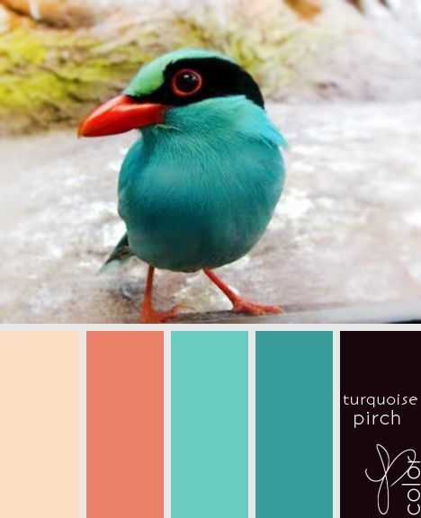 Feathery colours: Tropical bird blues and pinks: colour / color palette  inspiration.