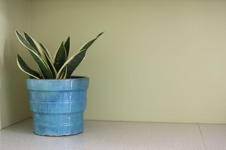 #interiorstyling #placesandgraces #bluepot #applegreen #indoorplant