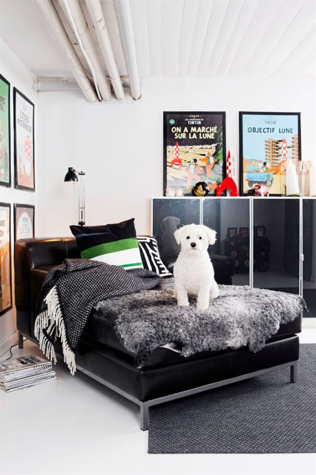 love day bed sofa and wall art w tintin pictures