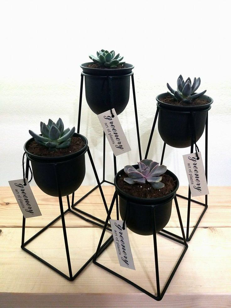 Wire pots with succulents #greenery #pots #planters #airplants #succulents #cactus #plants #chania #greece