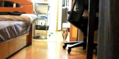 Man staat verdekt opgesteld achter kast. Poes volgt jacht instinkt en sluipt dichterbij.