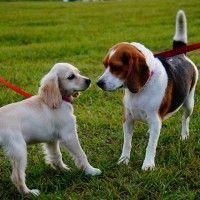 #dogalize Portiamo il cane a passeggio! Ecco perché è importante #dogs #cats #pets
