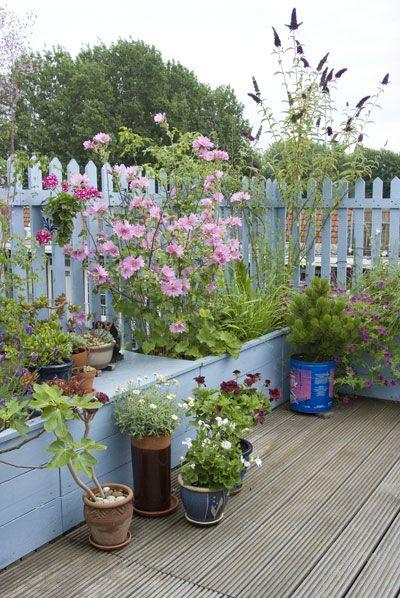 Allerlei soorten planten en bloemen in een mix en match van potten. Kies wat u wilt en het maak het creatief. Het hoeft niet allemaal netjes op een rij.....veel plezier!
