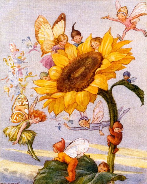 "Margaret W. Tarrant ""Sunflower Fairies""- English Illustrator (1888-1959)"