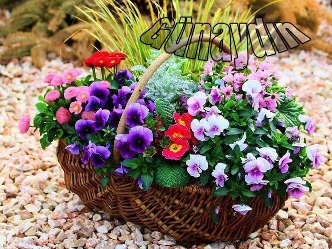Hayatın içinde sadece acılar yok; gülen çocuklar, açan çiçekler, gitmişte olsa çoğu hala uçan kuşlar, neşe, umut, hala sevenler, sevilmeyi hak edenler. Her şey ve siz varsınız. Umut pencereniz hep açık olsun hayat size daima daha güzel şeyler getirsin yeni günde. Yüzünüzde bir tebessüm Yüreğinizde sevgiler Dilinizde neşeli bir melodi olsun.. Güzel bir hafta yaşamanız dileğiyle
