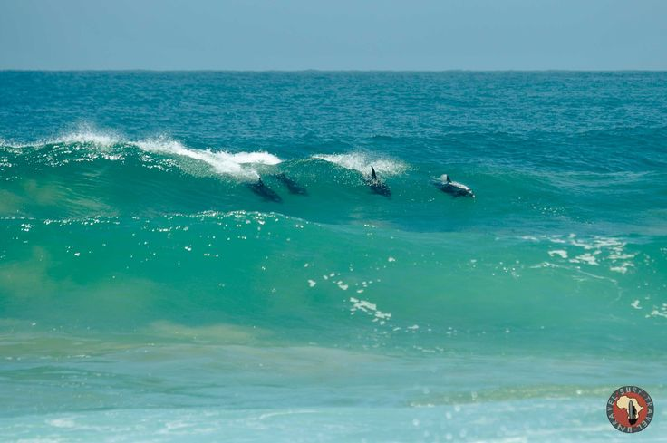 The best surfers on Surf Tour!