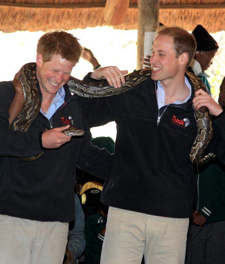 Pin for Later: Prinz Harry hat sich ganz schön gemausert  Bei einem Trip nach Botswana hielten Prinz Harry und William eine afrikanische Python im Jahre 2010.
