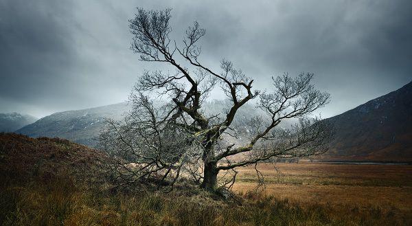 Glen Etive Tree, Highlands of Scotland _ Julian Calverley