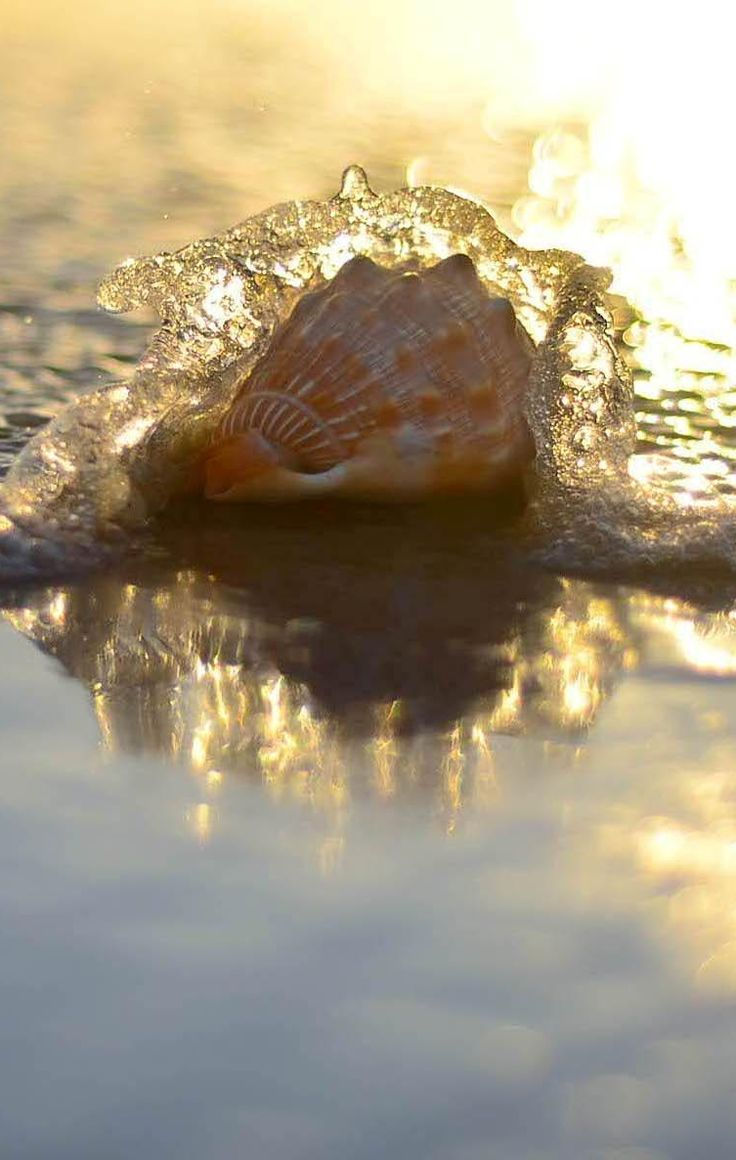 Today is a smooth white seashell, hold it close and listen to the beauty of the hours. ~ Unknown
