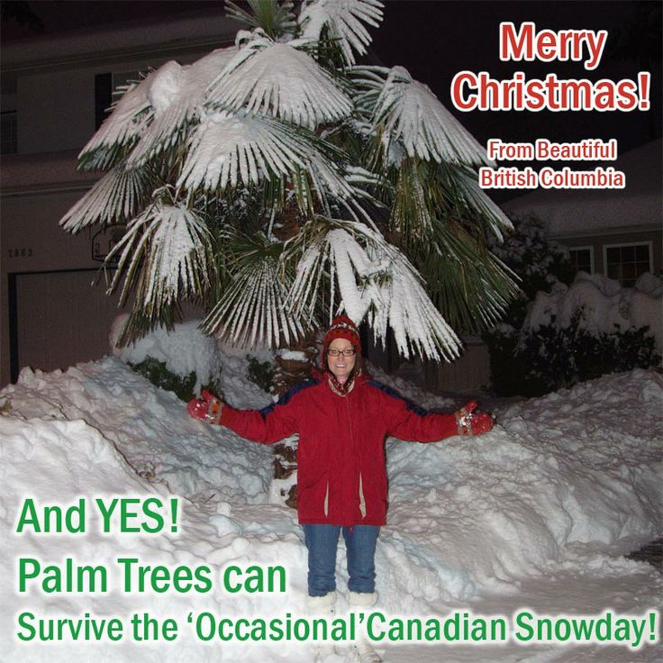 guides to trees in surrey bc