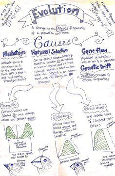 Evolution notes-  nice visual / model