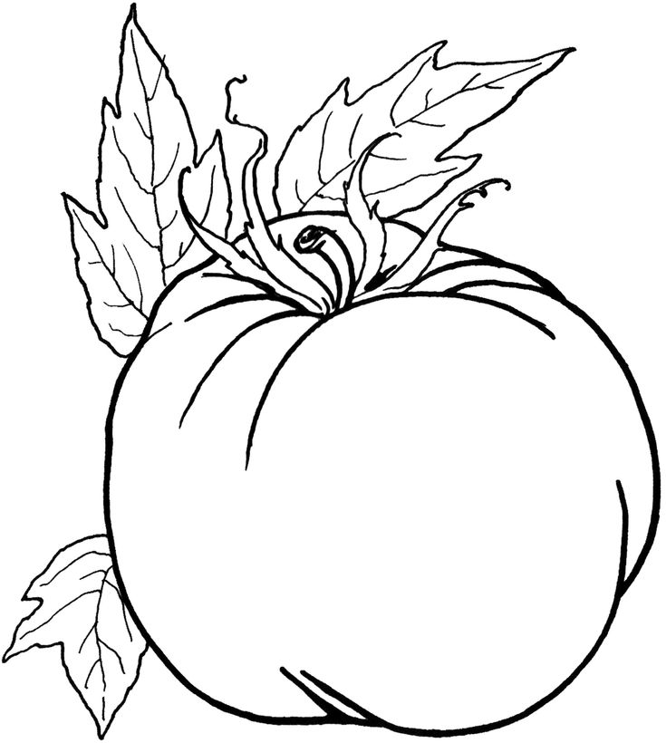 8 best fall coloring pages vpi 20 images on Pinterest Vegetables